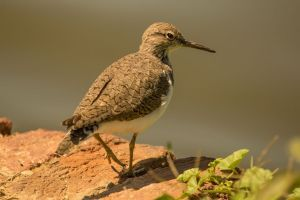 blog image sandpiper on ledge