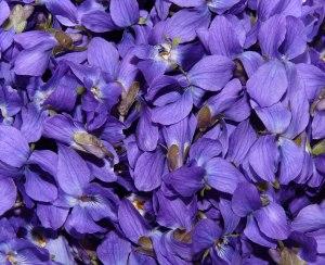 blog image violet petals