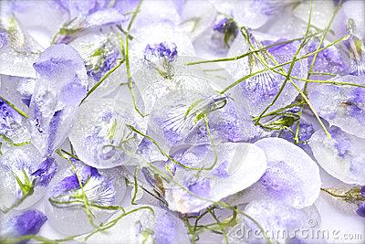 blog image violets 8