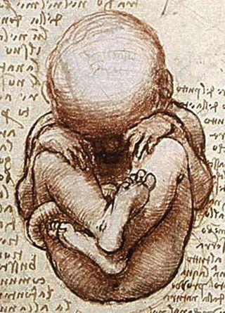 blog images Leonardo fetus