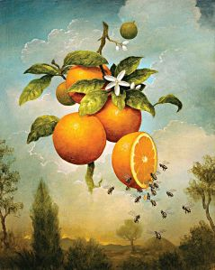 blog image oranges with bees