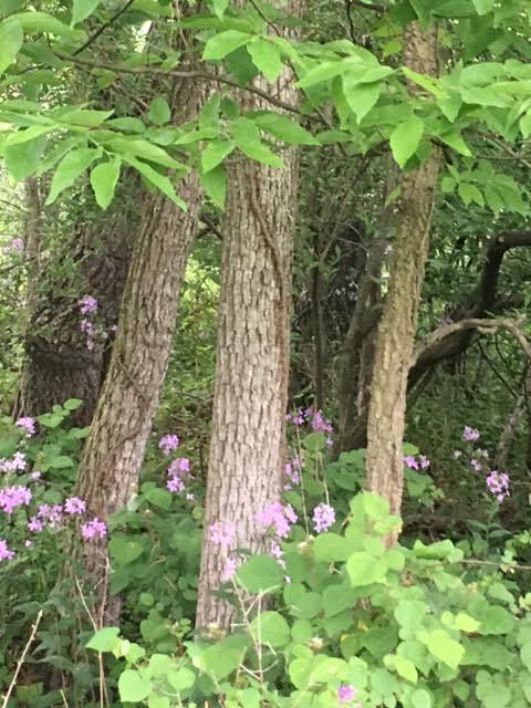 woods 11