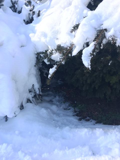 snow tunnel 3
