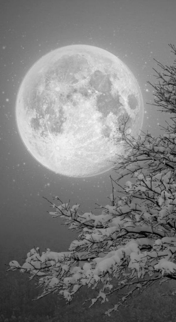 f6096bde7a5b5cbf556ccb5528edbe46--pale-moon-the-winter